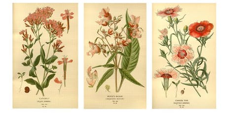 Wild Weed Walk + Botanical Illustration Workshop w/Jocelyn Toffic tickets
