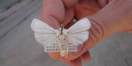 Introduction to the Moths of White Sands National Monument tickets