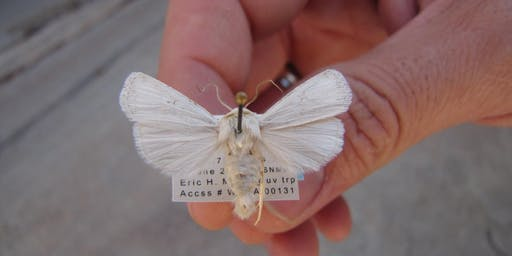 Introduction to the Moths of White Sands National Monument