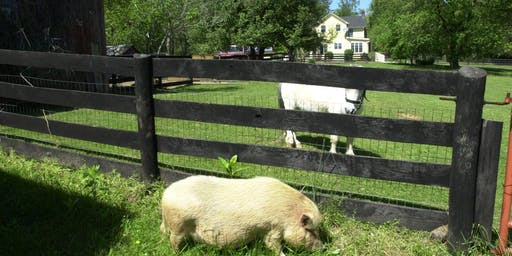 The White Pig Animal Sanctuary Open House