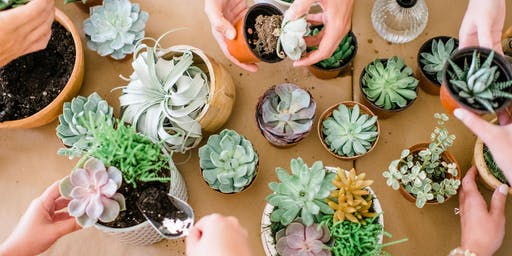Succulent Potting Workshop with Zia Boutique
