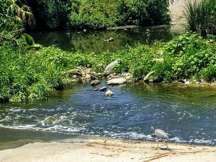 ALL ABOARD FOR NATURE! Trip # 2: Los Angeles River Walking Tour image
