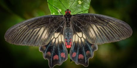 Butterfly Photography Workshop with Michael Snedic tickets