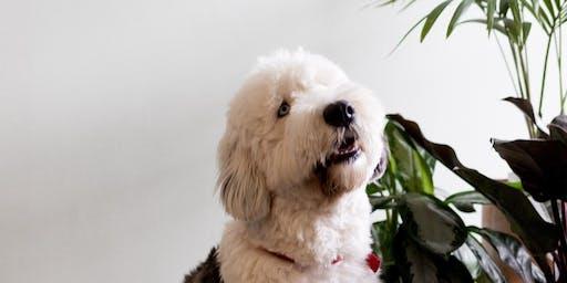 Puppy's Picnic at 127