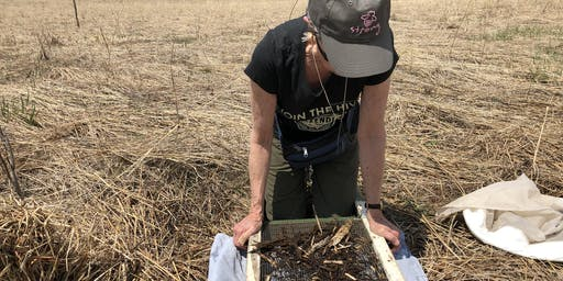 Citizen Science: Wild Bees & Beetle Banks at St. Croix Regional Bluffs Park