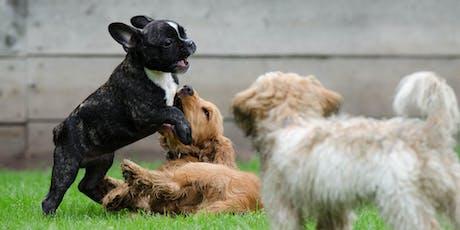 Begeleide speelweide: Puppy's tickets