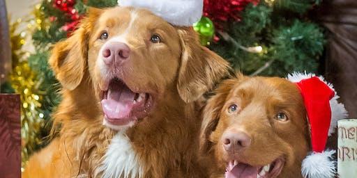 The Christmas Doggy Festival
