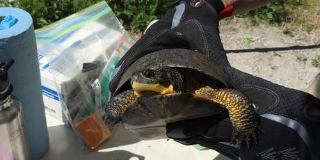 Lake Ontario Evening on Reptiles and Amphibians tickets