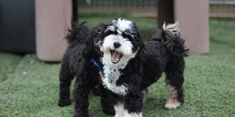Drop In - Puppy Play & Socialization  tickets