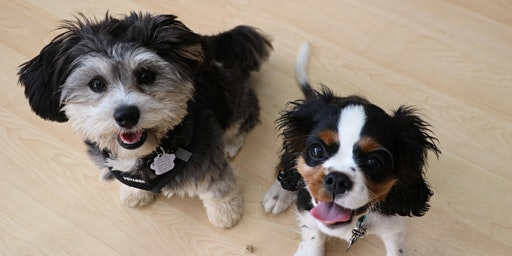 Training Class - Puppy Kindergarten