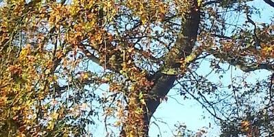 Mindful Autumn Walk in Leasowes Park