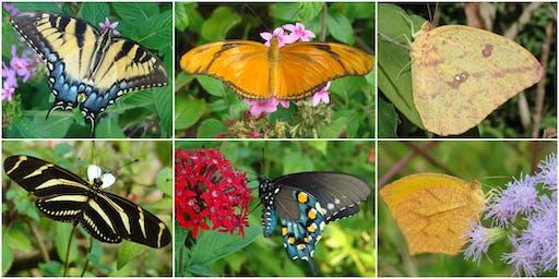 Butterflies: Fall & Winter Survival