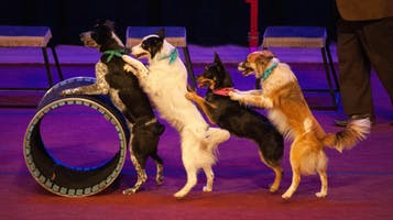 "Mutts Gone Nuts in ""Canine Cabaret"""