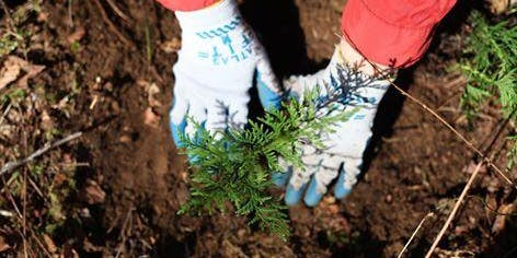 Help Plant Trees at North Green River Park