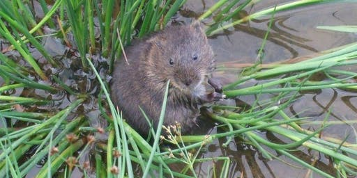 Young Rangers: Water Voles Day