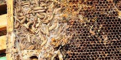 Talk - Lead Bee inspector for Scotland
