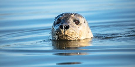 Moss Landing Wildlife Safari and Photography Workshop tickets