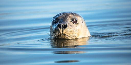 Moss Landing Wildlife Safari and Photography Workshop