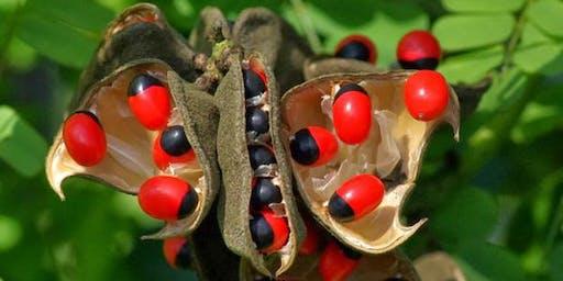 Strange Plants in a Strange Land: Strolling Science Seminar