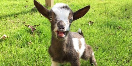 Baby Goat Yoga tickets