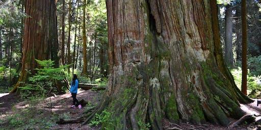 Big Tree Weekend: Tour the Giants II
