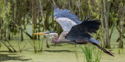 Olympus Birding Photography Workshop at Kensington Metro Park