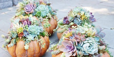 Boo! Succulent Pumpkin Centerpiece @ Sweet Digs tickets