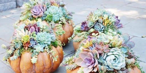 Boo! Succulent Pumpkin Centerpiece @ Sweet Digs
