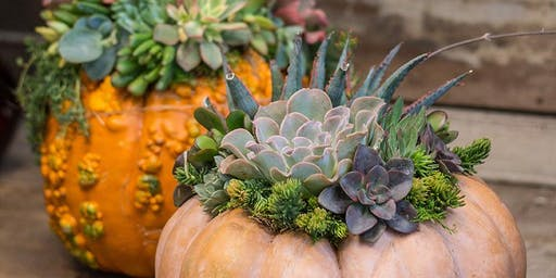 Succulent Pumpkin Workshops with Kathleen Nestell