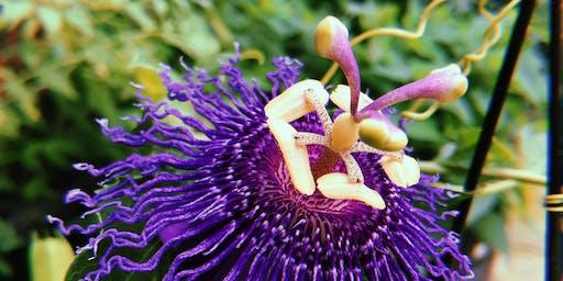 Intro to Herbal Medicine & Apothecary Sciences