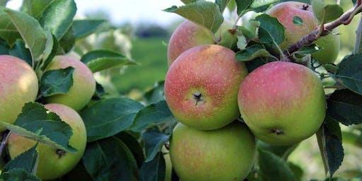 GAPSA Apple Picking @ Linvilla Orchards