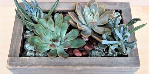 BrushTokes Plant Nite - BUILD YOUR OWN SUCCULENT GARDEN & PLANT BOX -  September 27, 2019 7:30-9:30 PM