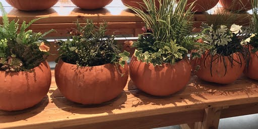 Make it & Take it: Pumpkin Planters