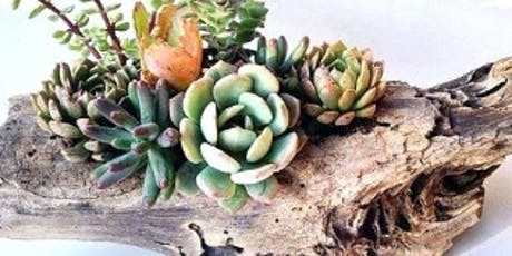 Succulents and Driftwood Centerpiece @ Sweet Digs tickets