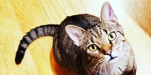 Pet Adoption With Kitty Connection
