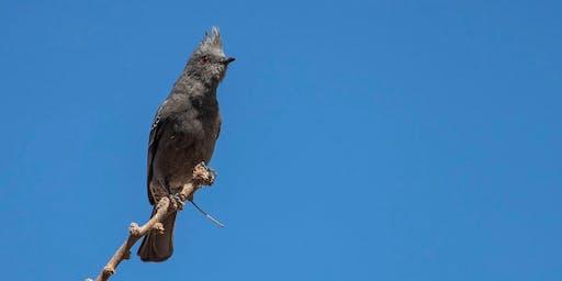 Fall Migratory Bird Walk