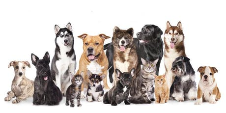Safe & Effective CBD Use in Pets (Dirty Dogs, Hillcrest) tickets