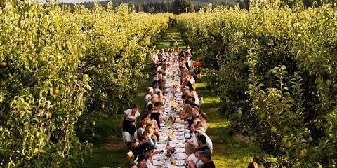 Yarra Valley Long Table Orchard Growers Lunch