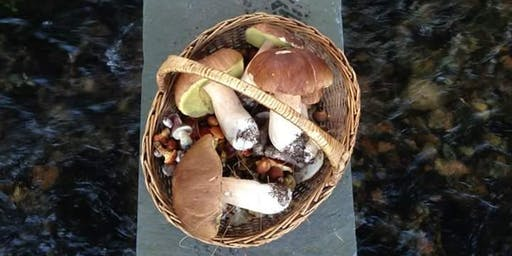 Edible Fungi Foray for Manchester Food & Drink Festival