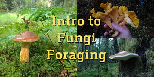 Intro to Fungi Foraging - Afternoon Session - Pollok Park