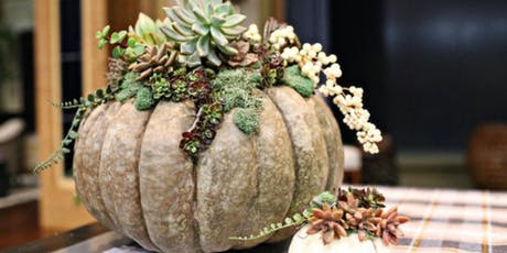 Succulent Pumpkin Centerpieces at Ciao Bella tickets