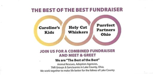 The Best of the Best Cat Fundraiser