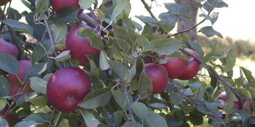An Apple Pickin Festival to Benefit Feeding Families West Ga