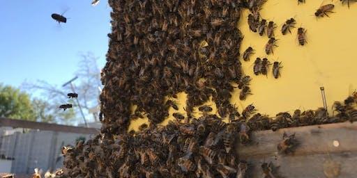 Beekeeping & Beyond