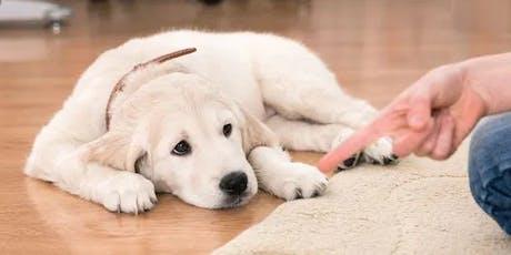 Palestra sobre comportamento canino (filhotes) ingressos