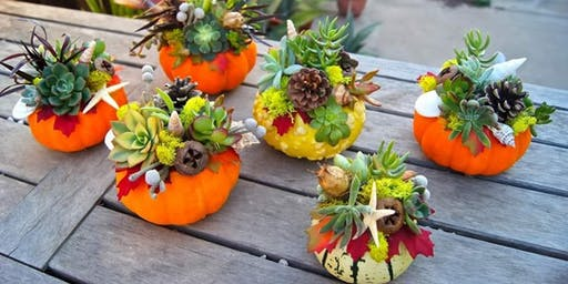 Create fall decor for your home while boosting your immune system!
