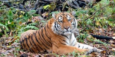 WFFR-Tigerland