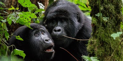 Monkey Business Presents Gorilla Day Benefit for The Gorilla Organization