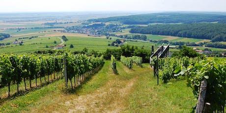 Blaufränkisch vs. Zweigelt Wine mini-class tickets