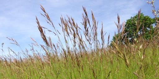 Grasses and Sedges - Grasslands and Meadows 2020